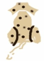 The Venture Spot Dog